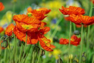 Tartson virágpor kúrát vegyes virágporral